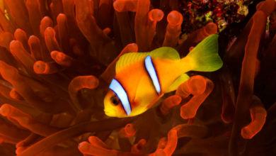 Photo of Красоты Красного моря: топ-5 райских мест для дайвинга