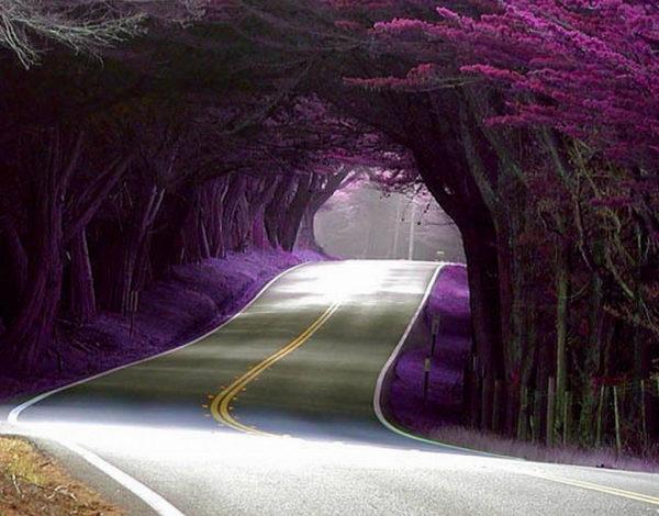 Photo of 8 самых интересных аллей и туннелей из цветов и деревьев