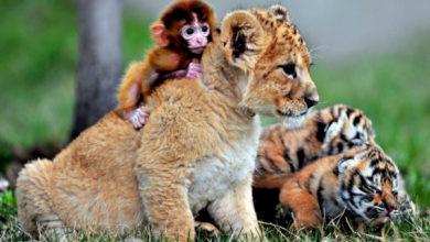 Photo of 5 мест с самыми милыми животными в мире
