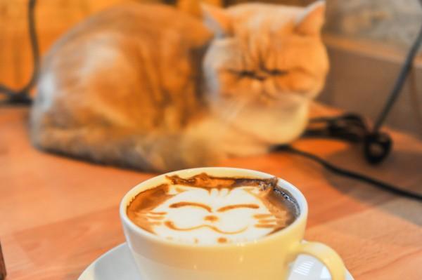 Photo of Петербург и кошки: от Эрмитажа до котокафе